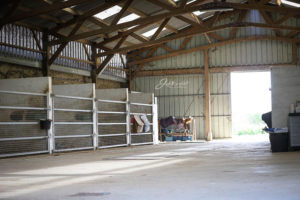Haras avec pension cheval retraite - ph. Judith's Art
